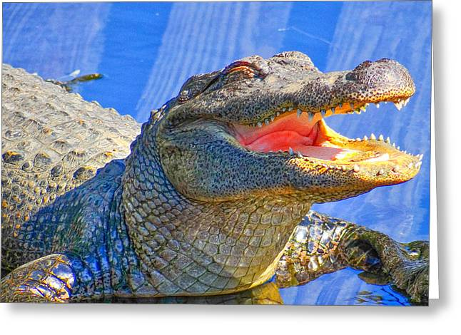 Laughing In The Morning Sun Greeting Card by Dennis Dugan