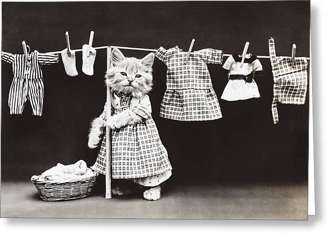 Kitten Greeting Cards - Laundry Day Greeting Card by Aged Pixel
