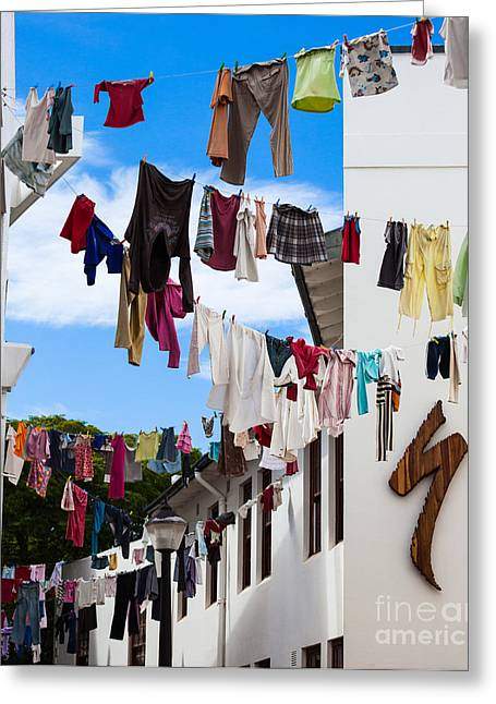 Stellenbosch Greeting Cards - Laundry Day Greeting Card by Claire Plumridge