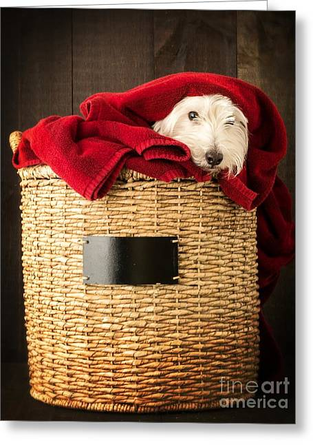 Puppies Photographs Greeting Cards - Laundry Day Greeting Card by Edward Fielding