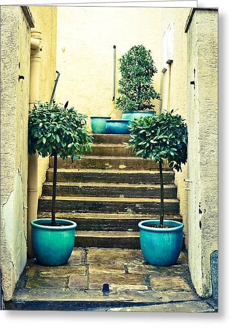 Alley Stairs Greeting Cards - Laurel plants Greeting Card by Tom Gowanlock