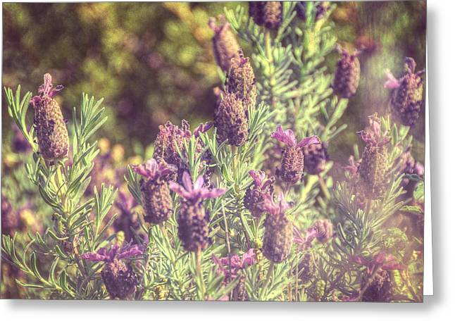 Vague Greeting Cards - Lavandula Stoechas Greeting Card by Taylan Soyturk