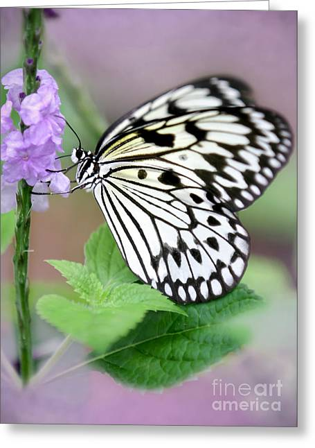 Rice Paper Greeting Cards - Lavendar Dreams Greeting Card by Sabrina L Ryan