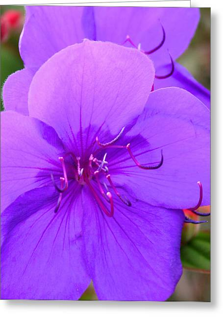 Stamen Pyrography Greeting Cards - Lavendar the Other Purple Greeting Card by DUG Harpster