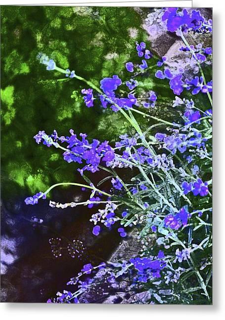 Pamela Cooper Greeting Cards - Lavender 4 Greeting Card by Pamela Cooper
