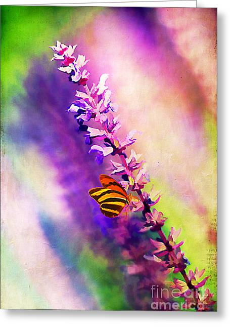 Lavender And Butterlies Greeting Card by Darren Fisher
