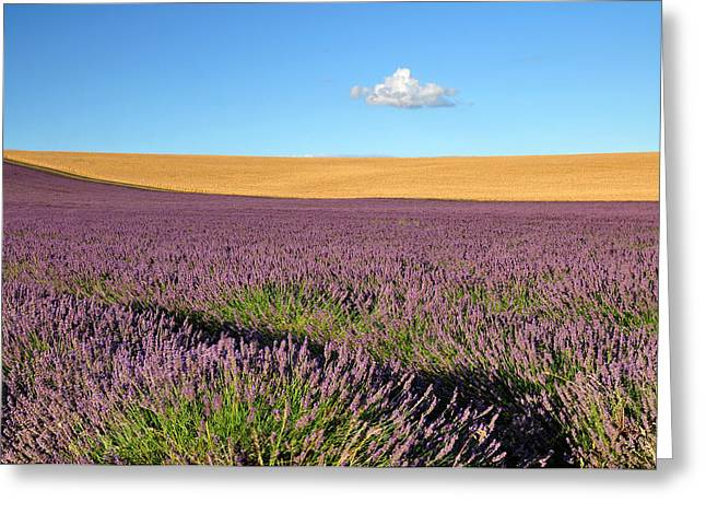 Hitchin Greeting Cards - Lavender and cloud Greeting Card by Rachel  Slater