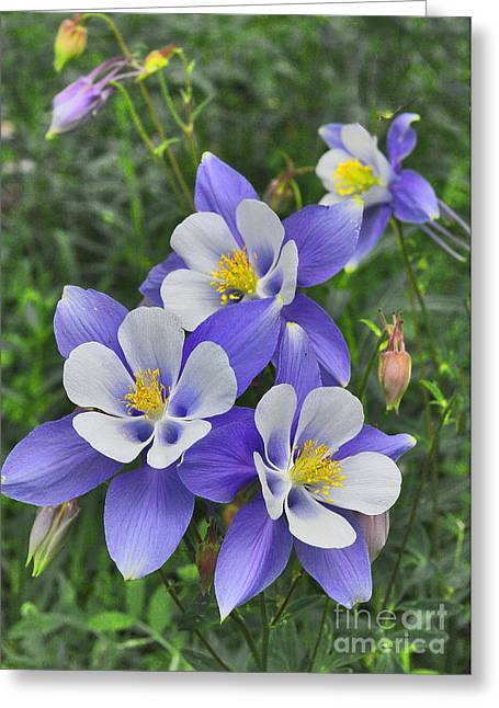 Metal Sheet Greeting Cards - Lavender and White Star Flowers Greeting Card by Mae Wertz