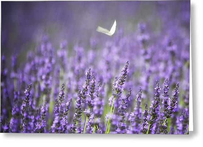 Lavender And White Greeting Card by Vicki Jauron