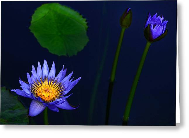 Glowing Water Greeting Cards - Lavender Blue  Greeting Card by Julie Palencia