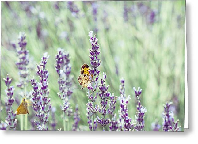 Butterfly On Lavender Greeting Cards - Lavender Daze Greeting Card by Cathy Donohoue