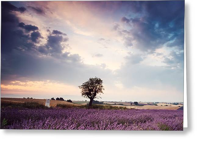 Colombos Greeting Cards - Lavender dream Greeting Card by Matteo Colombo