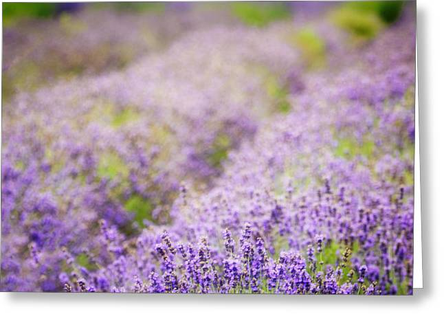 Mound Greeting Cards - Lavender Dreams Greeting Card by Vicki Jauron