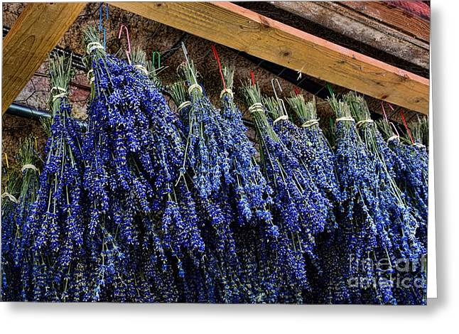 Lavender Drying Greeting Card by Paul Ward