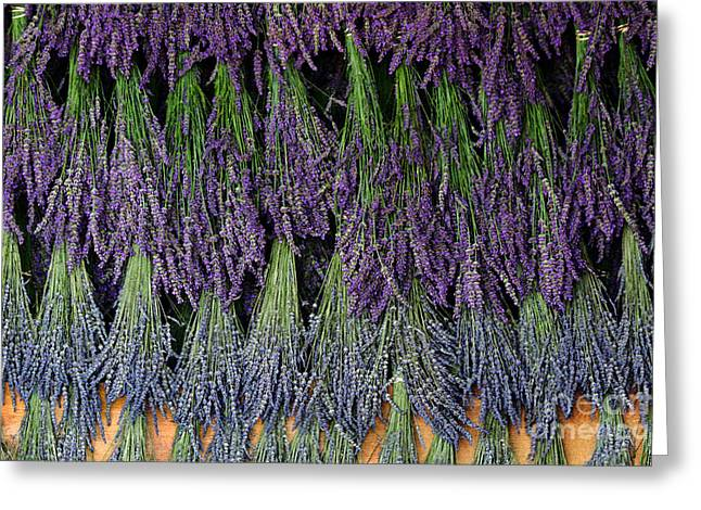 Drying Rack Greeting Cards - Lavender drying Rack Greeting Card by Catherine Sherman