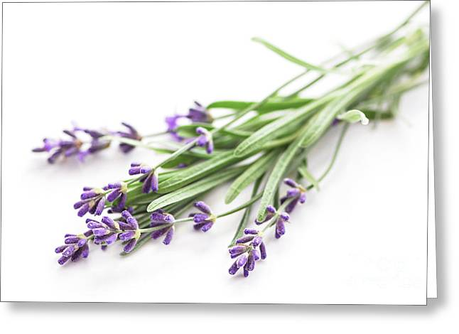 Sense Greeting Cards - Lavender Greeting Card by Elena Elisseeva