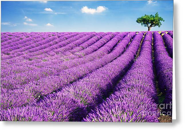 Colombos Greeting Cards - Lavender field and tree in summer Provence France. Greeting Card by Matteo Colombo