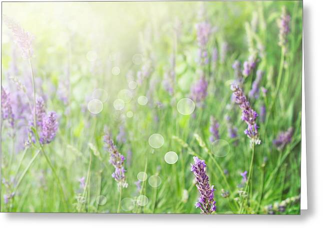 Lavender Field Background Greeting Card by Mythja  Photography