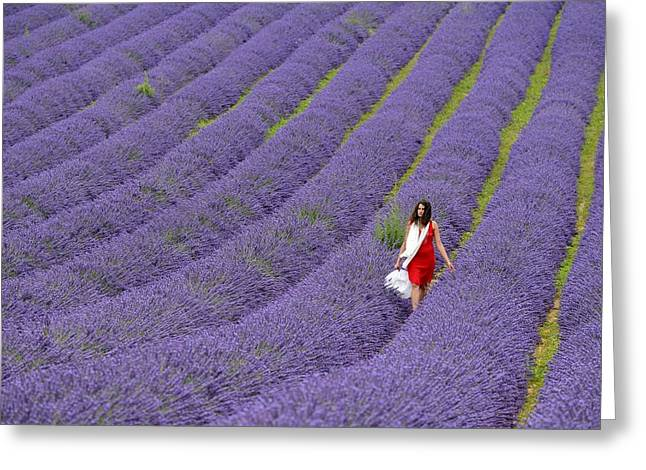 Azur Greeting Cards - Lavender Field Greeting Card by Christian Heeb