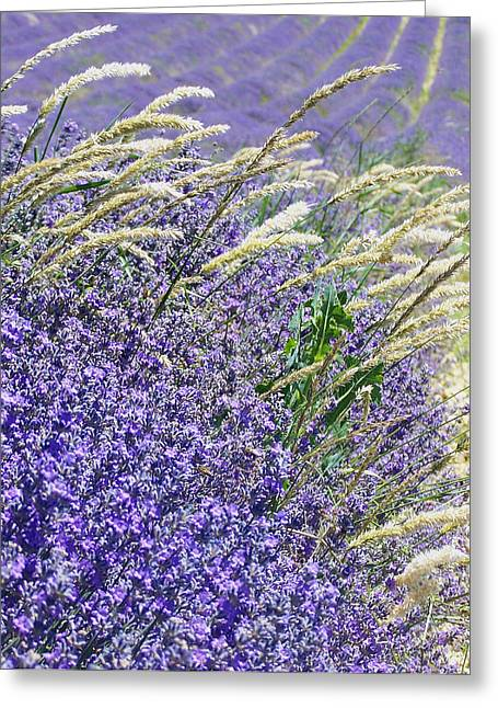 Lavender Pyrography Greeting Cards - Lavender Field in Provence Greeting Card by Betsy Moran