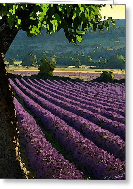 Cole Drawings Greeting Cards - Lavender Fields Greeting Card by Cole Black