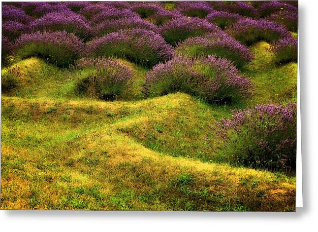 Mound Greeting Cards - Lavender Fields Greeting Card by Michelle Calkins