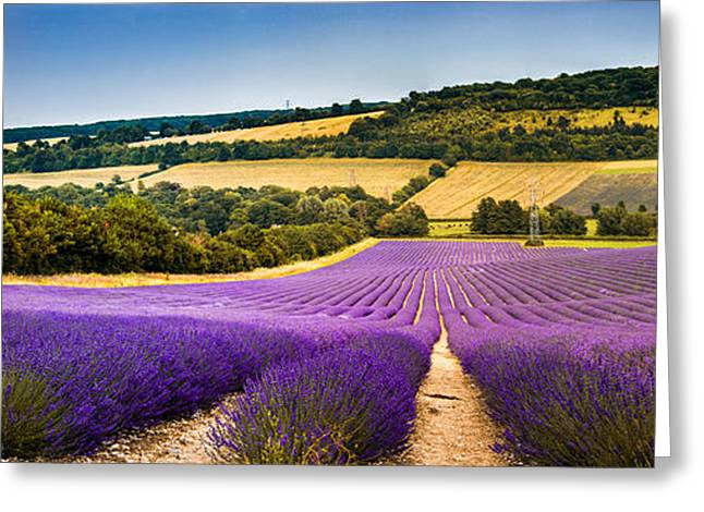 Lavender Fields Greeting Cards - Lavender Fields panoramic Greeting Card by Ian Hufton