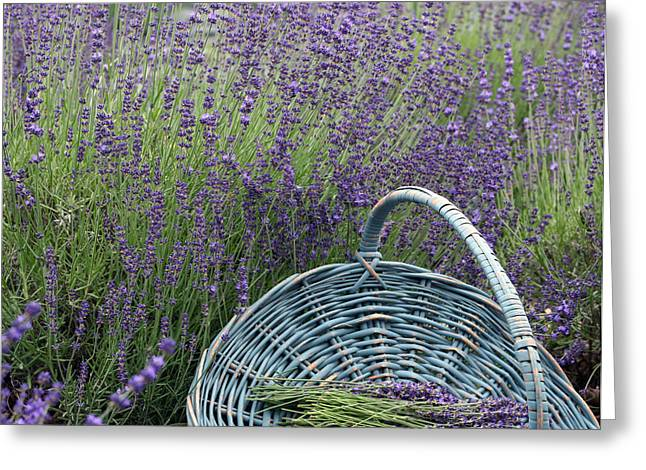 Lavender Pyrography Greeting Cards - Lavender Fields Greeting Card by Patricia Innes
