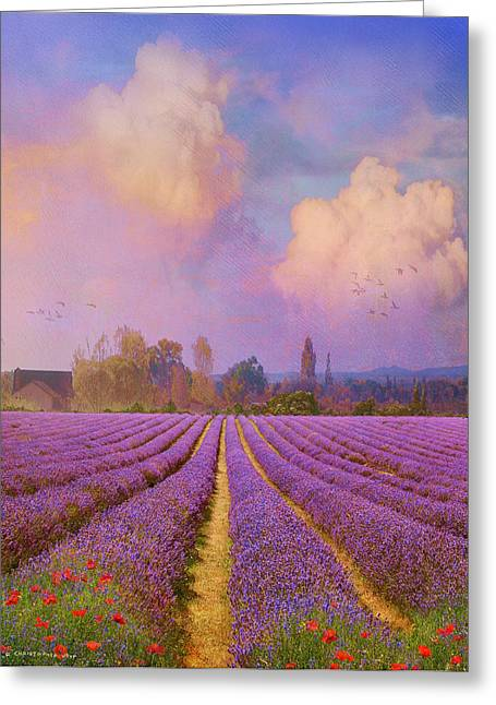 Tuscan Sunset Greeting Cards - Lavender Fields Provence Greeting Card by R christopher Vest