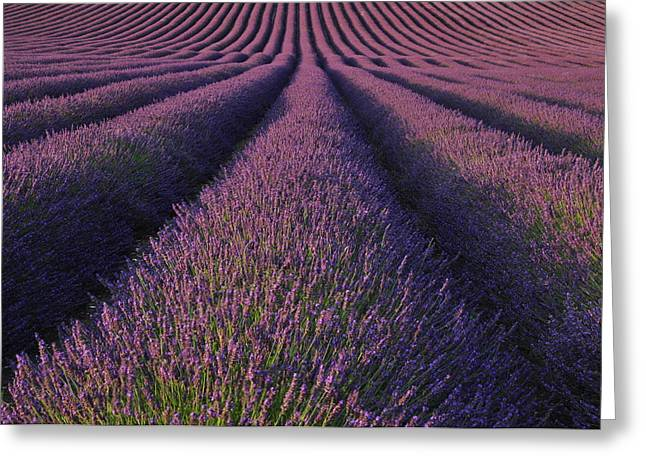 Hitchin Greeting Cards - Lavender fields Greeting Card by Rachel  Slater