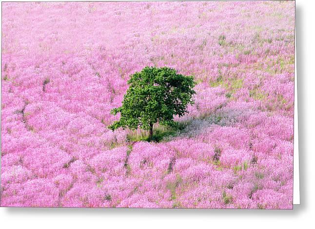Spring Scenes Greeting Cards - Lavender Fields With Lonely Tree Greeting Card by Mikel Martinez de Osaba