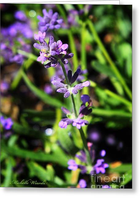 Ointment Greeting Cards - Lavender Flowers Greeting Card by Michelle Wiarda