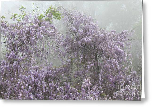 Wisteria In Bloom Greeting Cards - Lavender Fog Greeting Card by Leslie Kirk
