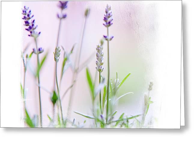Spa Center Greeting Cards - Lavender Fragrance Of France. Elegant Knickknacks Greeting Card by Jenny Rainbow