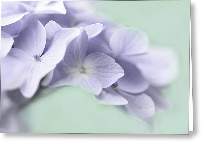 Purple Hydrangeas Greeting Cards - Lavender Hydrangea Flower Macro Greeting Card by Jennie Marie Schell