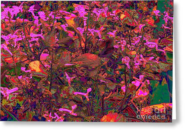 Replacing Greeting Cards - Lavender in Pink Greeting Card by Raphael OLeary