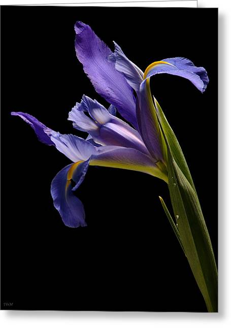 Flowers With Back Ground Greeting Cards - Lavender Iris Greeting Card by Jeetindra Harripershad
