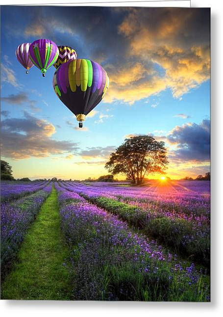 Harvest Time Greeting Cards - Lavender Leisure Flight Greeting Card by Matthew Gibson