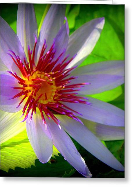 Water Lilly Greeting Cards - Lavender Passion Greeting Card by Karen Wiles