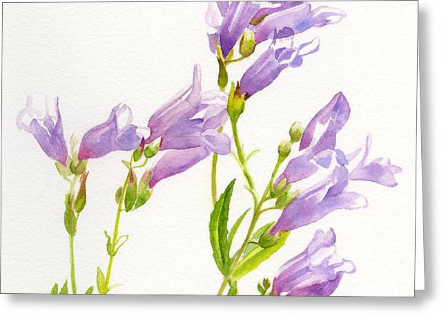 Lavender Penstemon Wildflowers Greeting Card by Sharon Freeman