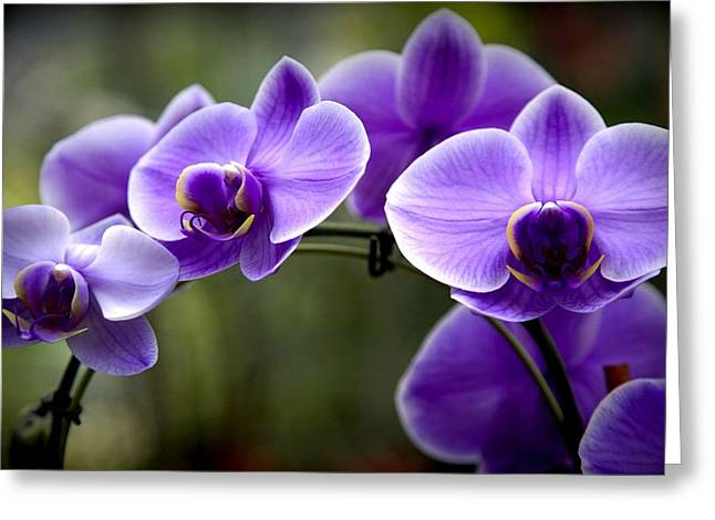 Purple Orchids Greeting Cards - Lavender Rainbow Greeting Card by Karen Wiles
