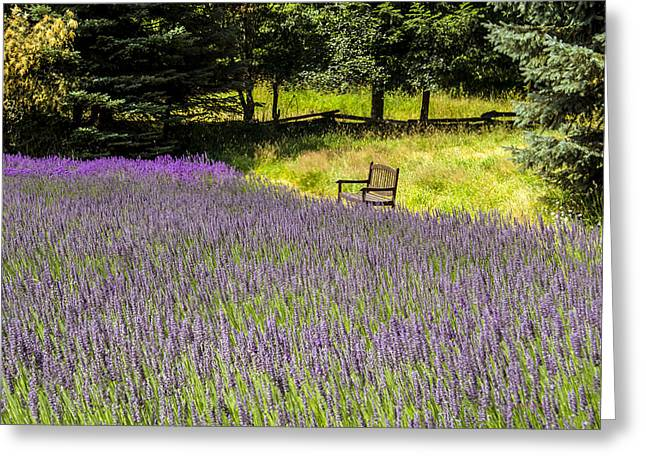 Healthy Greeting Cards - Lavender Rest Greeting Card by Kathy Bassett