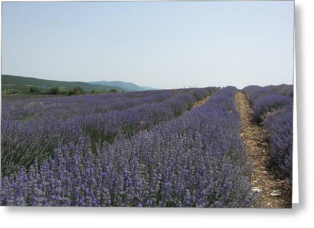 Lavender Sky Greeting Card by Pema Hou