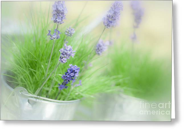 Galvanize Photographs Greeting Cards - Lavender Sprigs Greeting Card by Amanda And Christopher Elwell