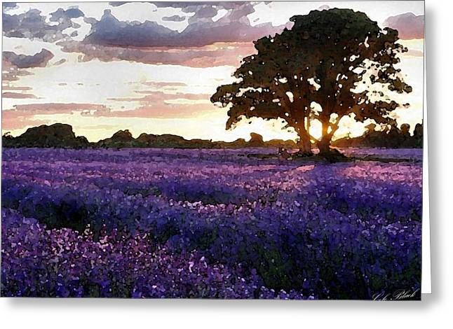 Cole Drawings Greeting Cards - Lavender Sunset Greeting Card by Cole Black