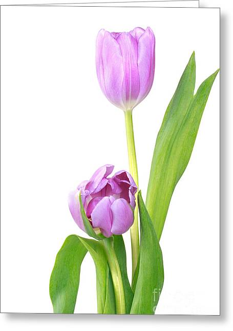 © Beve Brown-clark Greeting Cards - Lavender Tulips Greeting Card by Reflective Moments  Photography and Digital Art Images