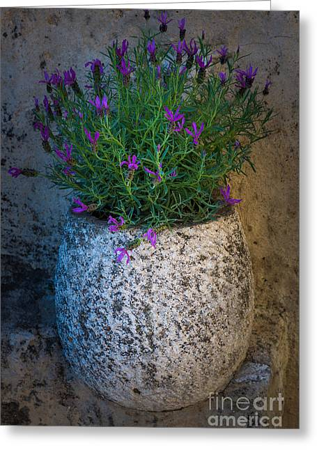 Vence Greeting Cards - Lavender Vase Greeting Card by Inge Johnsson