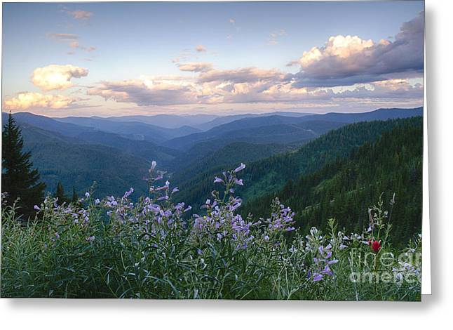 North Idaho Greeting Cards - Lavender View Greeting Card by Idaho Scenic Images Linda Lantzy