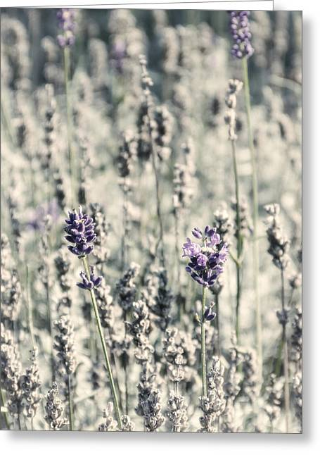 Alternative Home Decor Greeting Cards - Lavender Field Greeting Card by Wim Lanclus