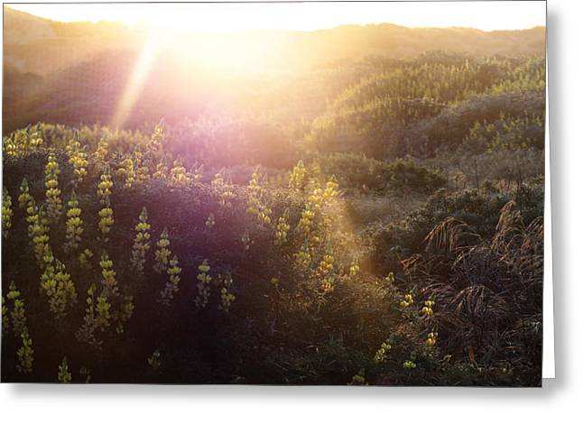 Coast Highway One Greeting Cards - Lawsons flowers of light. Greeting Card by Stan Angel